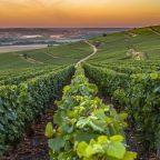 Off the Beaten Wine Path