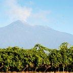 Carricante: Sicily's Premiere White