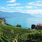 Chasselas: Switzerland's White Wine